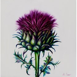Thistle & Thorns